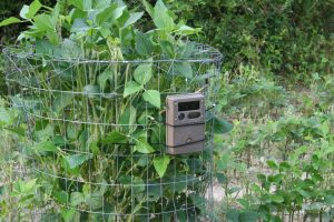 Trail cameras near food plots - The Southern Land Brokers